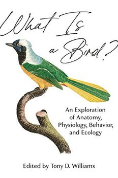 What Is a Bird? book cover
